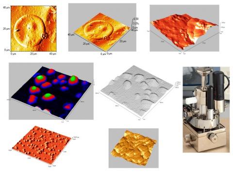 Atomic force microscopy studies